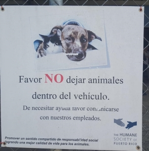 FundacionBpB_201805_toallazo-por-las-mascotas7